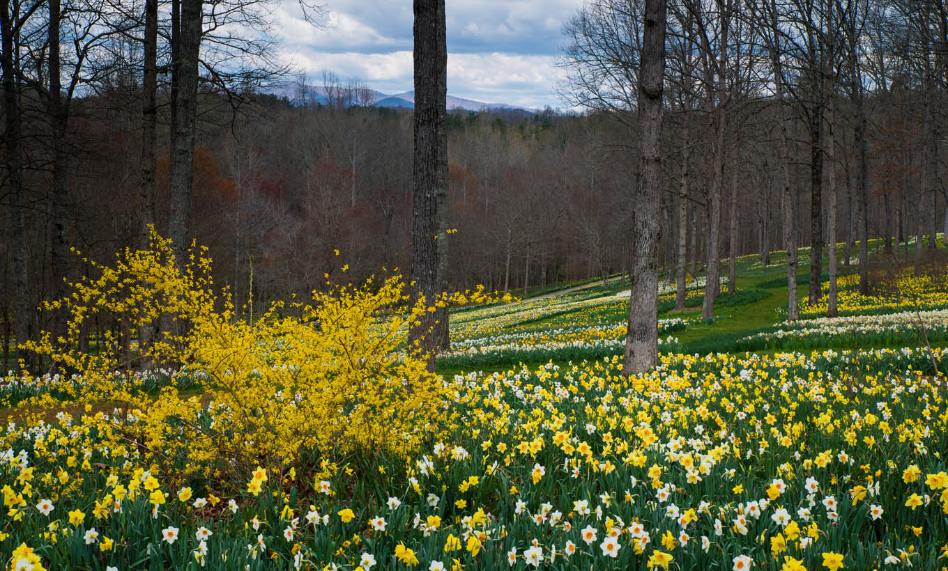 Gibbs Gardens is home to the largest daffodil garden in the world.